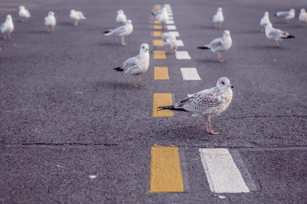 ¿Pueden ser las carreteras seguras para todos?